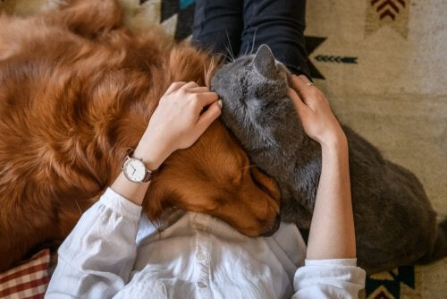 Four Ways to Express Your Love to Your Pet