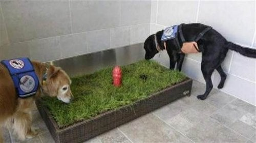 Airport Pet Relief Facilities Are on the Increase