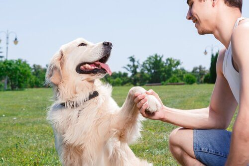 A man shaking a dog's paw.