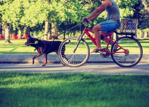 A dog is walking with his owner on a bike.
