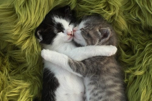 Two cats sleeping together.