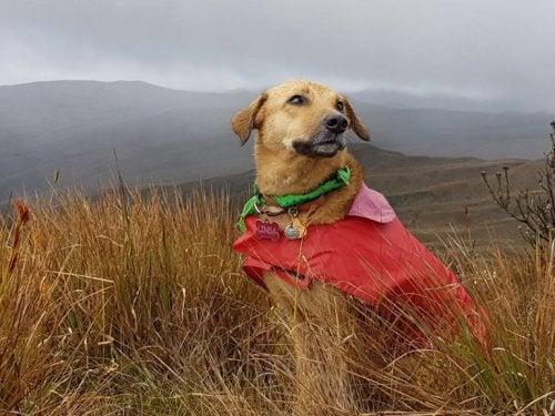 A dog sitting in a field.