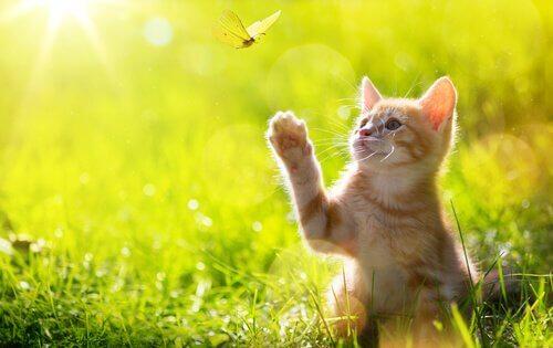 A kitten is sitting in a grassy meadow.