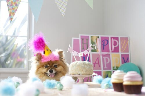 A dog at a birthday party.