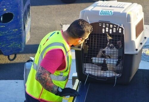 A dog in a pet carrier ready to enter the cargo hold.