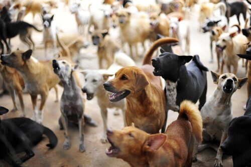 There are non-profit animal welfare groups around the world that rescue dogs from bad conditions.