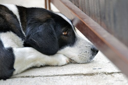 A dog lying on the ground.
