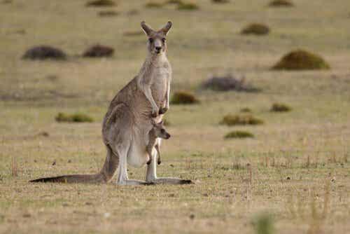 10 Types of Marsupials