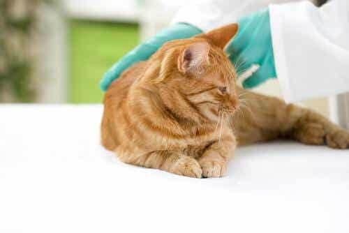 Find Out Which Vaccines Are Mandatory for Your Pet!