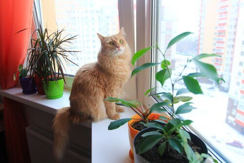 An orange cat standing beside a plant.
