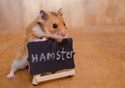 Small but Fierce: How to Tame a Hamster