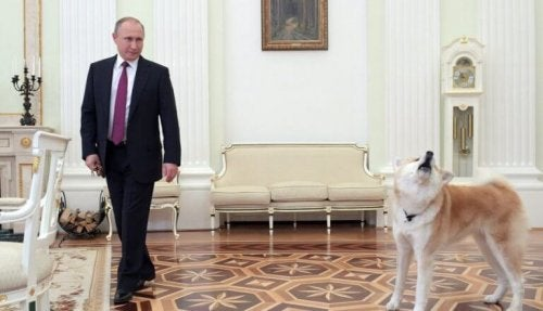 Vladimir Putin's dog scared journalists with her barking.