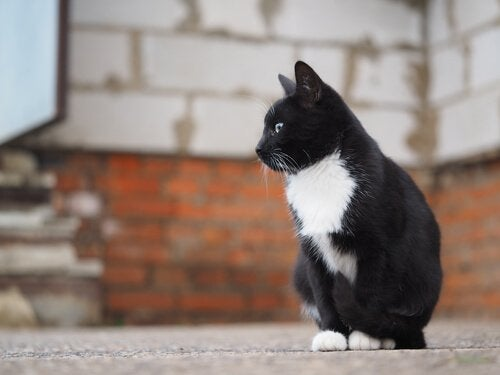 A black and white cat sitting in front of a wall.