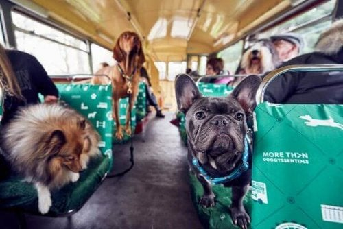 A tour bus with people and their dog friends.