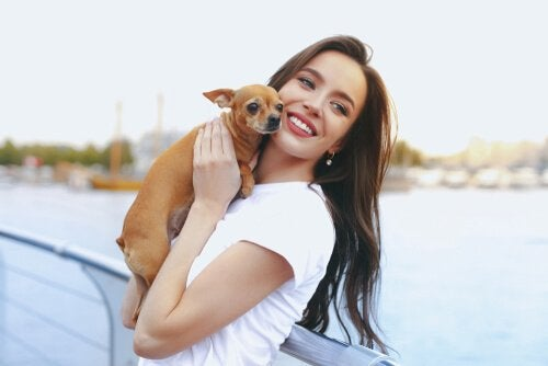 A woman posing with a Chihuahua dog.