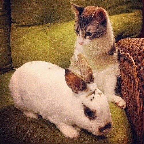 Dino, the two-legged cat and a bunny.