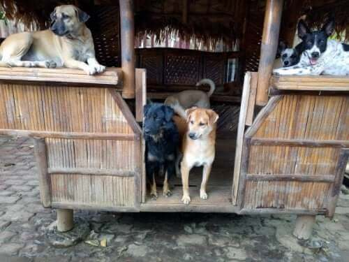 Dogs in a small thatched shelter.