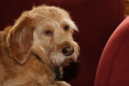 A dog on an armchair.