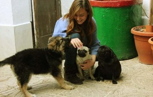An animal shelter volunteer caring for some dogs