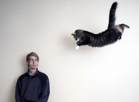 A cat jumping towards a man.