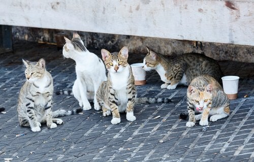 Cats of the Alhambra.