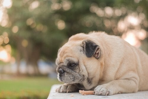 Why Do Dogs Eat Less in Summer?