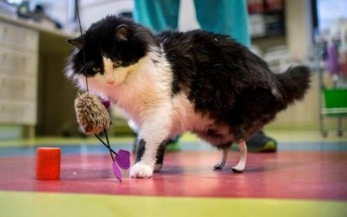 Bionic Felines: Prosthetic Legs for Handicapped Cats