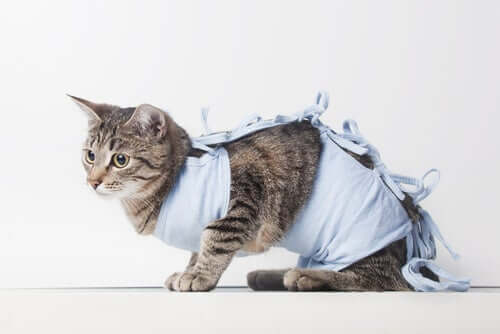A cat wearing a hospital robe.