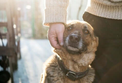 A dog being loved by their owner.