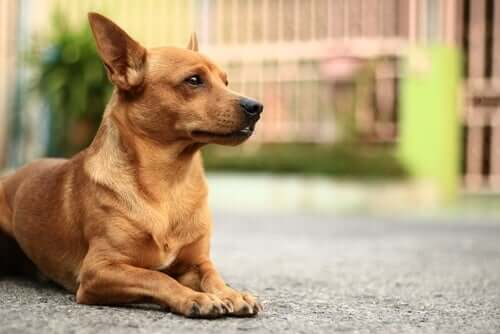 The Most Common Skin Conditions in Dogs