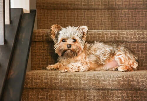 A dog lying on a staircase.