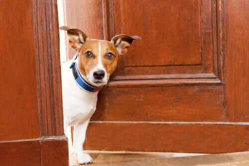 A dog partly outside a door.