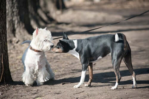 A well socialized dog sniffing another.