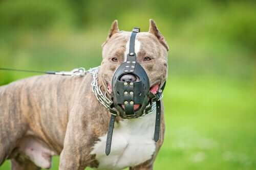 A dog with a muzzle.