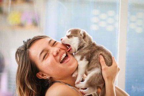 A dog yawning near a woman's face.