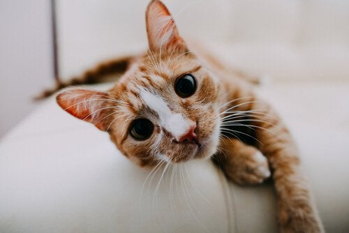 A kitten lying down on a couch looking at the camera.