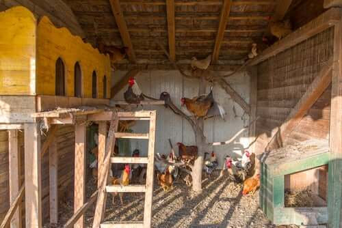 The inside of a chicken coop.