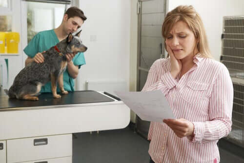 Pet Insurance Policies: Liability and Health Coverage