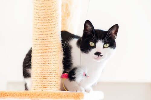 A cat behind a scratching post.
