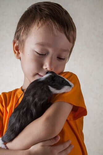 A child is gently holding his pet in his arms.