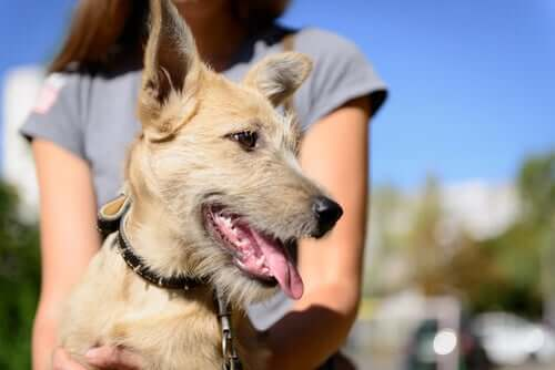 Adopting A Dog? Make Sure You Comply With The Law