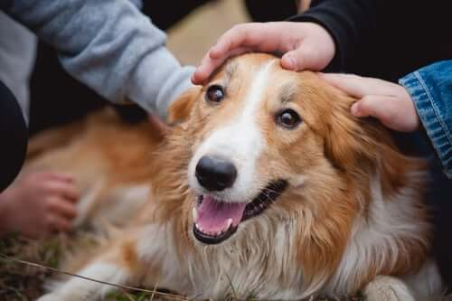 People petting a happy dog.