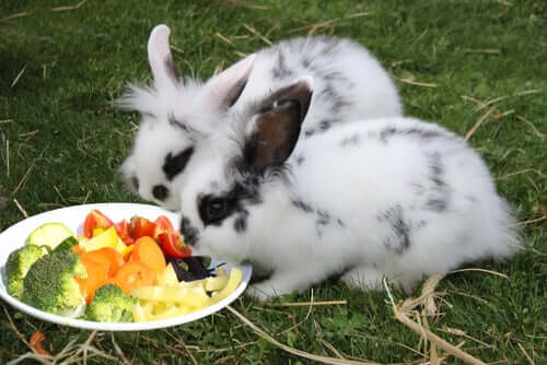 A couple rabbits eating vegetables off a plate in the middle of a yard.