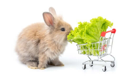 A rabbit eating lettuce from a mini shopping cart.