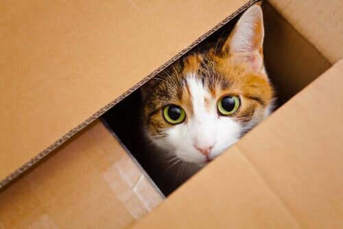 A cat inside a box.