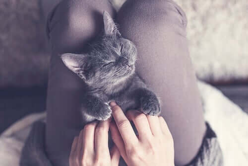 A cat sleeping on someone's lap.
