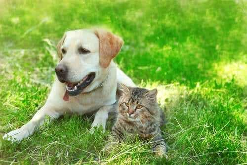 Do You Think Dogs and Cats Can Be Friends?
