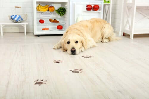 A dog lying on the ground looking at their paw prints.