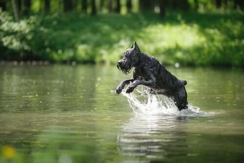 A dog prancing in the water.