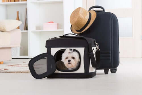A dog inside a traveling carrier.